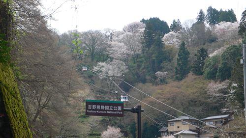 yosinoyama2015015_R.jpg