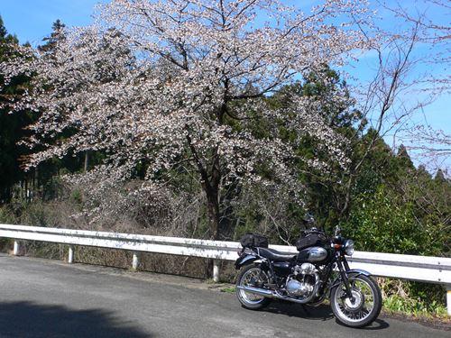 yosinoyama2015020_R.jpg