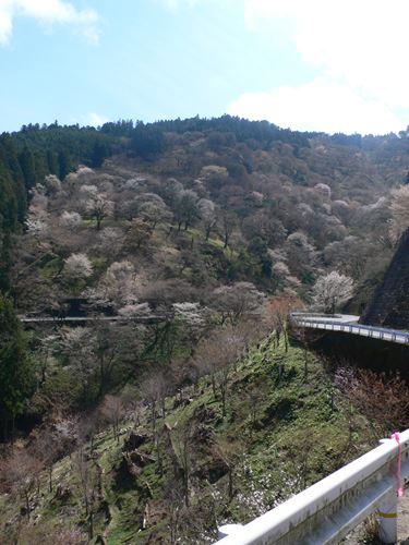 yosinoyama2015021_R.jpg