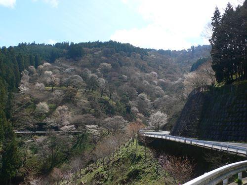 yosinoyama2015022_R.jpg