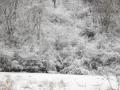 岩手の樹氷