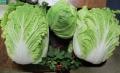 白菜キャベツ