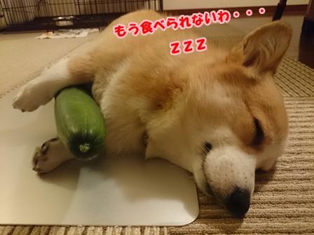 0702きゅうり3