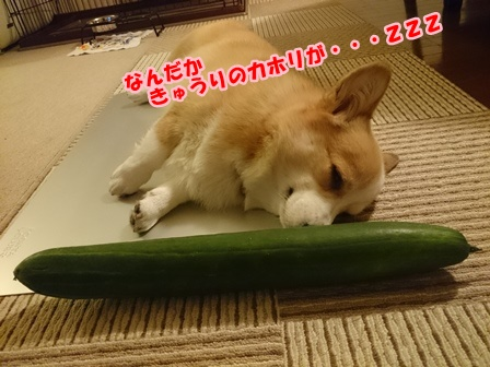 0702きゅうり4