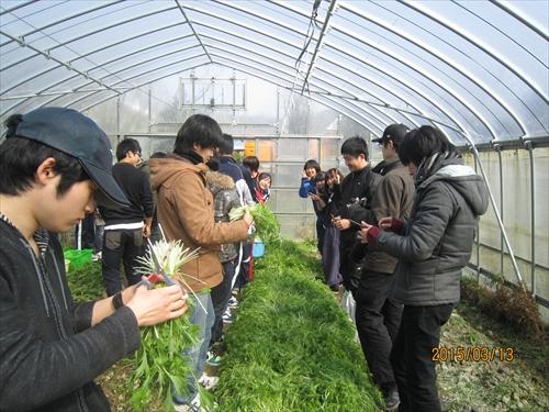 京野菜収穫体験&調理体験
