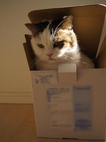おせち箱に入った