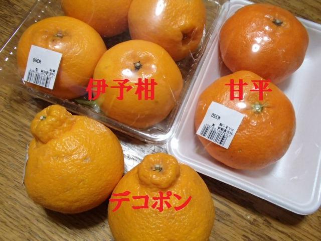 柑橘大好き (1)アップ