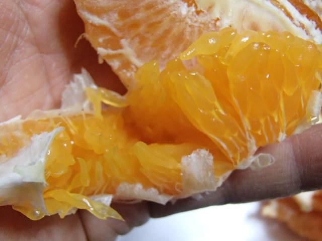 柑橘大好き (5)