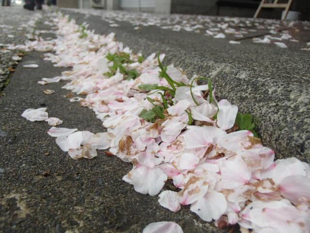 桜散る (2)
