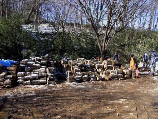 WoodlogJan2015-2.jpg