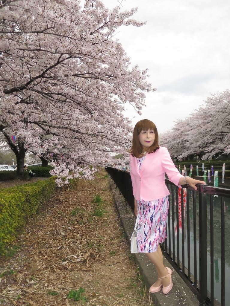 ピンクスーツ桜A(2)