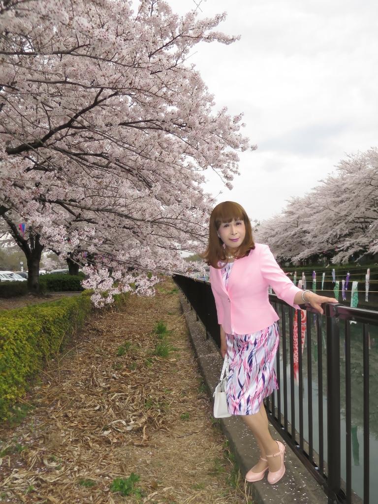 ピンクスーツ桜A(3)