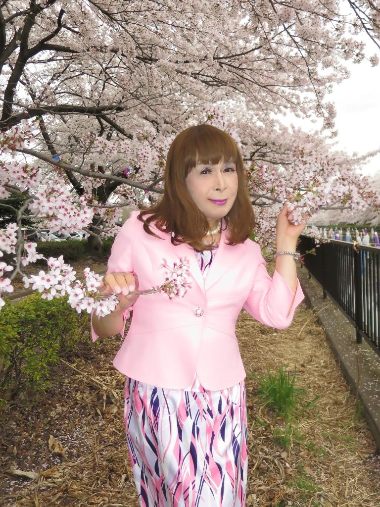 ピンクスーツ桜A(8)