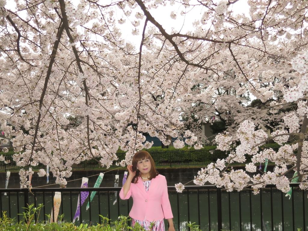 ピンクスーツ桜C(1)