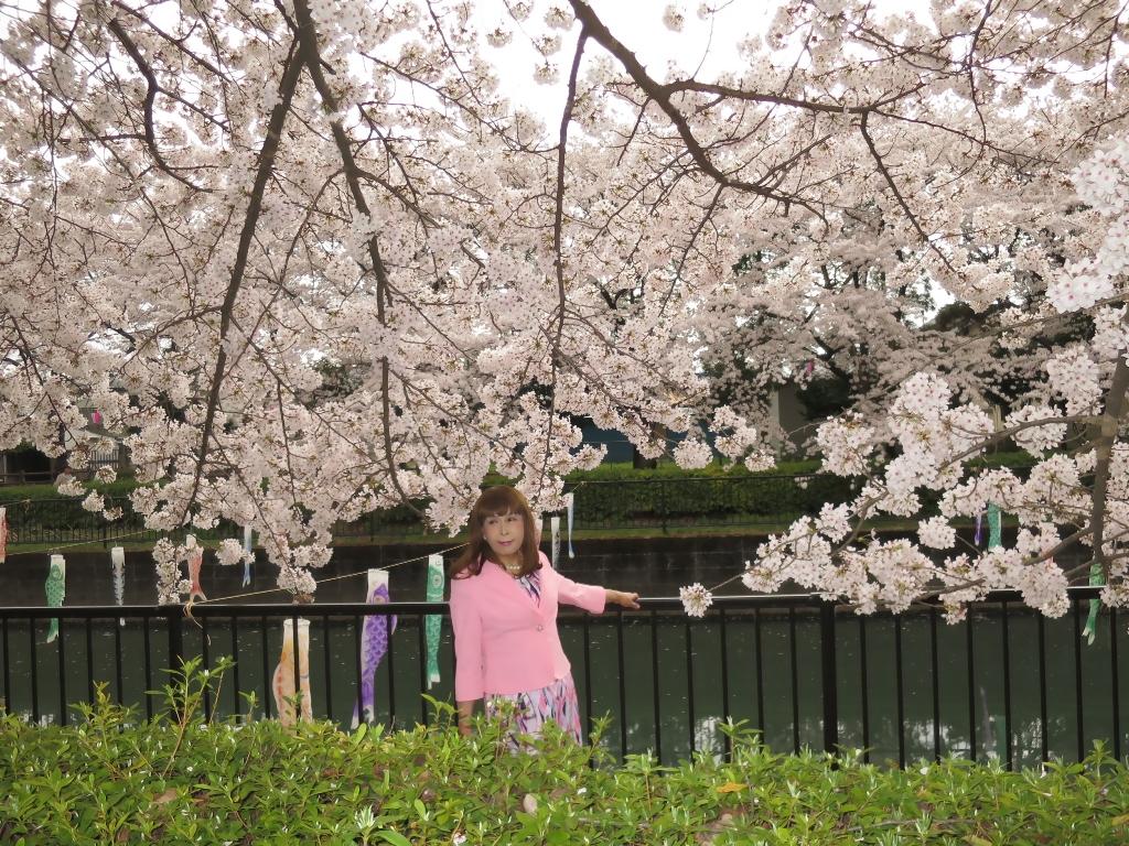 ピンクスーツ桜C(2)