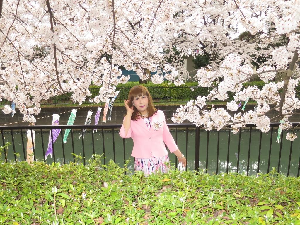 ピンクスーツ桜C(3)