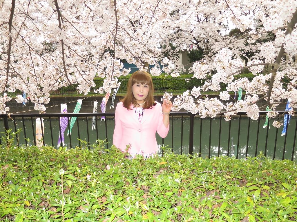 ピンクスーツ桜C(4)