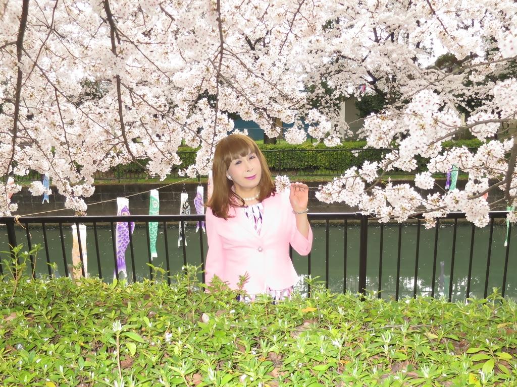 ピンクスーツ桜C(5)