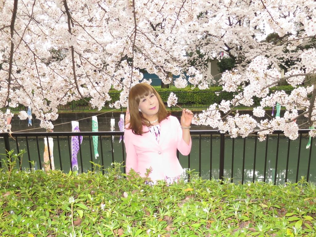 ピンクスーツ桜C(6)