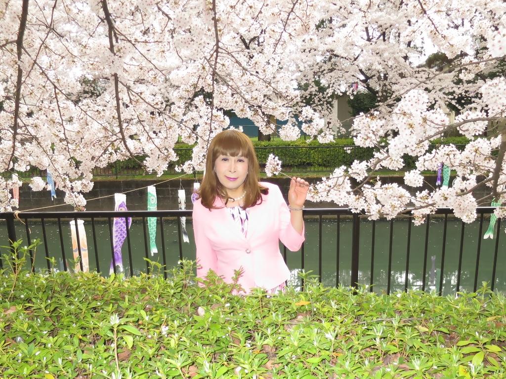 ピンクスーツ桜C(7)