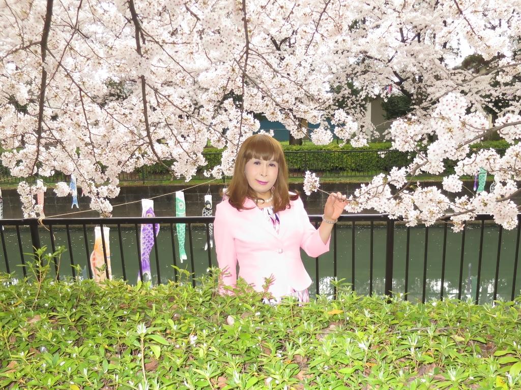 ピンクスーツ桜C(8)