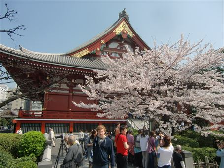 浅草寺境内の桜 ②