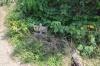 ヤグル川5
