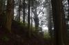 玉置山の森