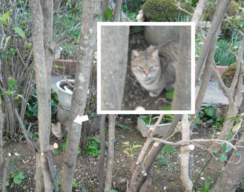 久々のネコ発見。