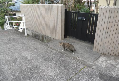 今日のネコ発見。その1