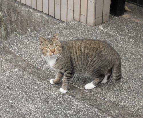 今日のネコ発見。その2