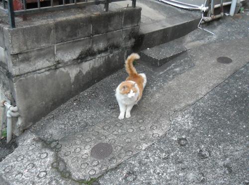 今日のネコ。