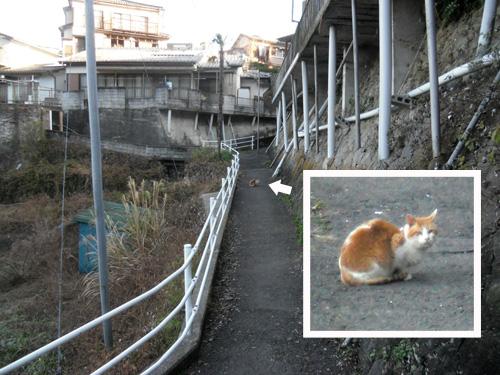 猫、発見。1