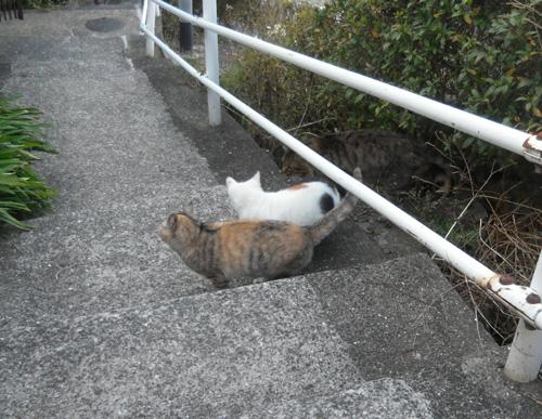 猫、発見。2