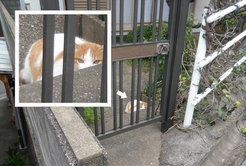 今日の・・・、ネコ発見。