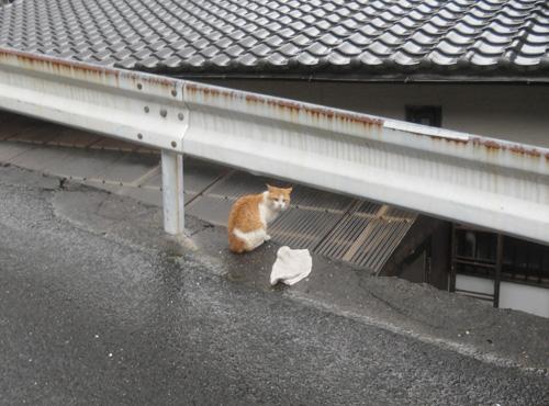 ネコ発見!?