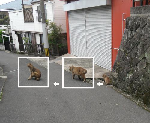 ネコの三段活用!?