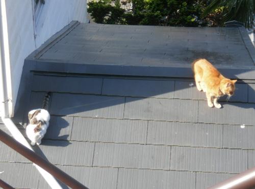 猫発見拡大。