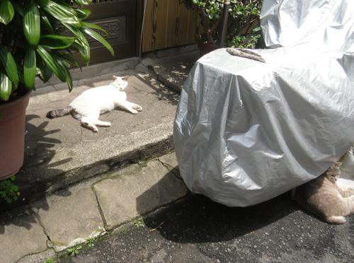 ネコ発見!まずは1匹。
