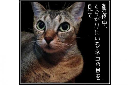 イリ目2_convert_20141226205503