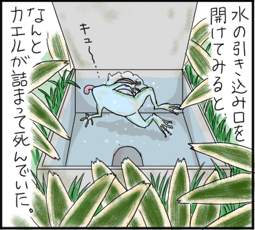 カエル水3