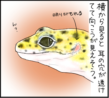 ヒョウモン3
