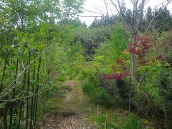 15春の庭2