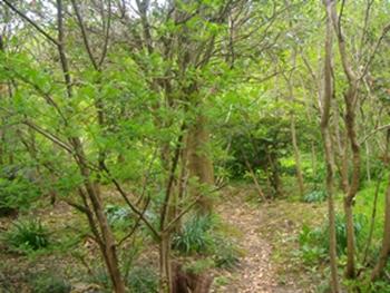 15春の庭