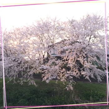 fc2blog_2015041822322114f.jpg