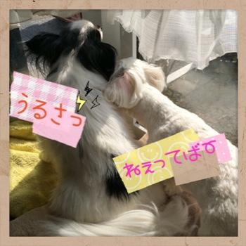 fc2blog_20150418223533f0d.jpg
