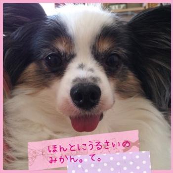 fc2blog_20150418223944ff9.jpg