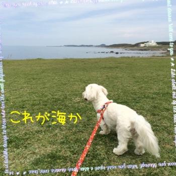 fc2blog_20150506101603e45.jpg