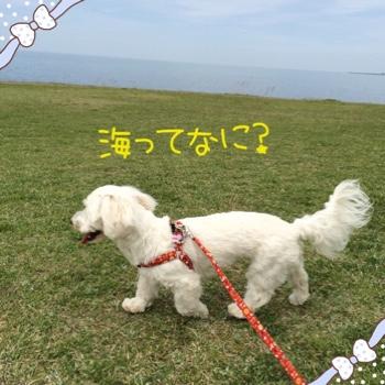 fc2blog_20150506101624c3a.jpg
