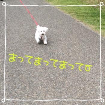 fc2blog_20150510152351c47.jpg
